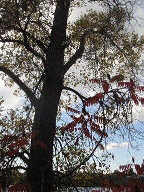 fall visitation park