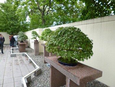fall bonsai