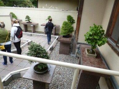 bonsai montreal