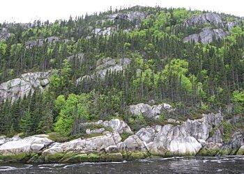 forest Saguenay
