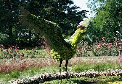korean crane
