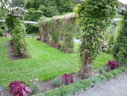 shrub garden