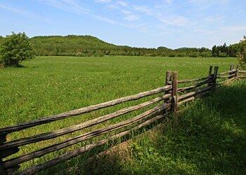 landscape of bic