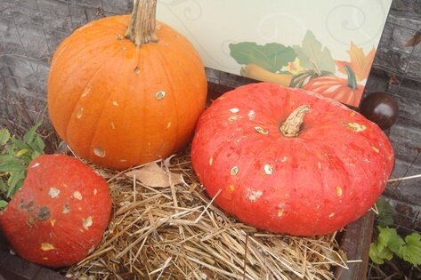 red pumpkins