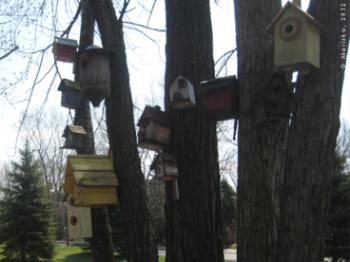 parc verdun birds nuns island